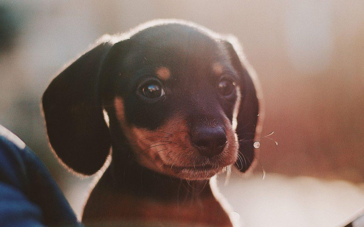 interieur-puppy-proof-cribio