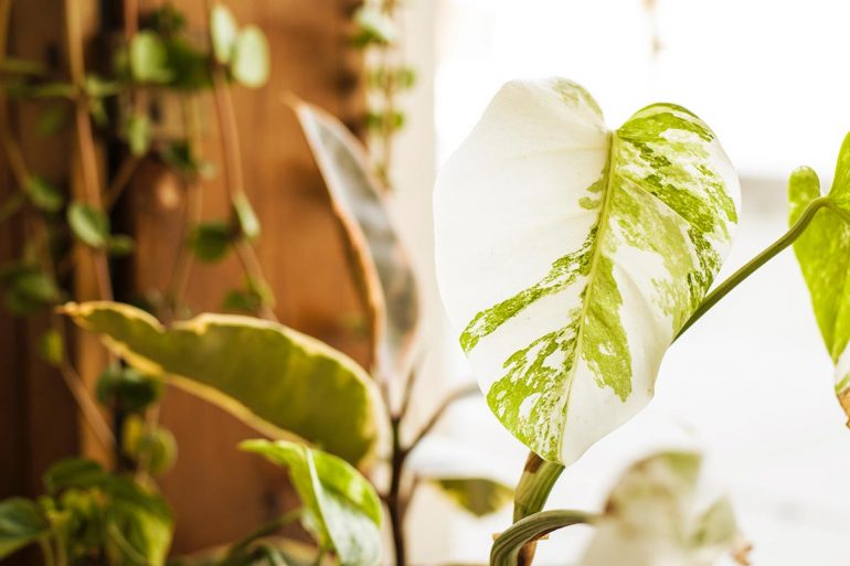 bijzondere-kamerplanten-inspiratie-cribio