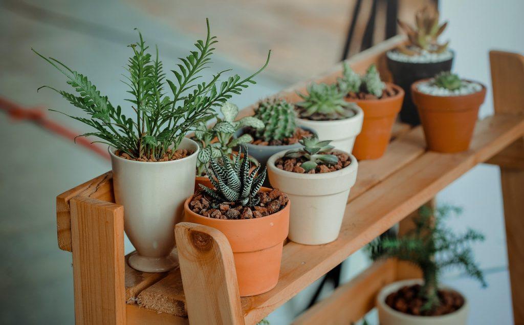 thuiskantoor-plant