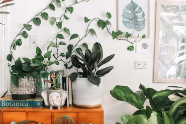 namaak-planten-cribio