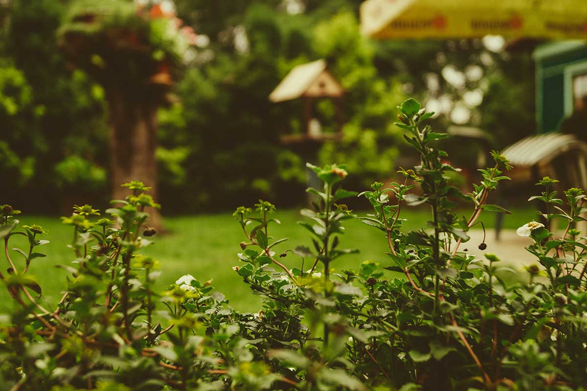 tuin-winterklaar-maken-cribio